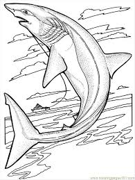 Small Picture Sharks Coloring Page Free Shark Coloring Pages