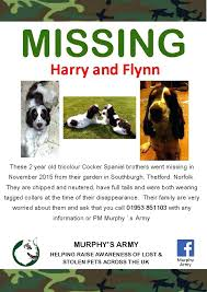 Lost Pet Flyer Maker Interesting Lost Poster Template Pet Flyers Missing Cat Dog Free Flyer