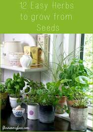 12 easy herbs to grow from seeds via flouronmyface com