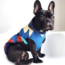 french bulldog coat printed french bulldog winter coat