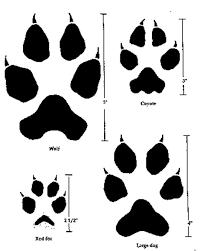 Wolf Identification Washington Department Of Fish Wildlife
