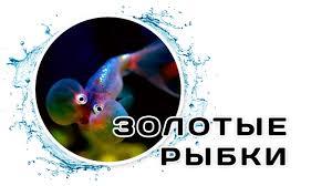 <b>Золотые рыбки</b> - YouTube