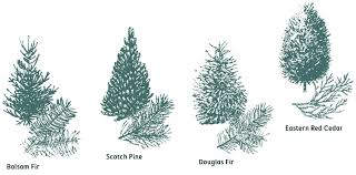 Types Of Christmas Trees For SaleTypes Of Fir Christmas Trees