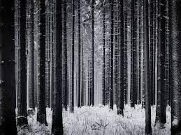 black and white snow photography. Unique Snow Black U0026 White Snow Photography On And O