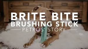 brite bite brushing stick the revolutionary way to clean your dog s teeth they ll actually love