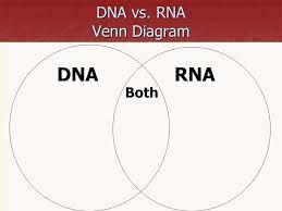 Acid And Base Venn Diagram Acids And Bases Venn Diagram Answers Barca Fontanacountryinn Com