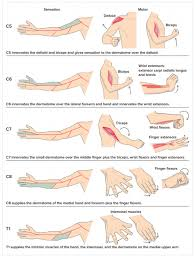 Orthopedic Assessment Chart Cervical Examination Physiopedia