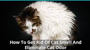 get rid of that stinky cat odor smell