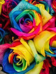 HD Rose Wallpapers on WallpaperDog