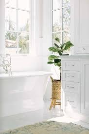 vintage roll top bathtub with fiddle leaf fig plant