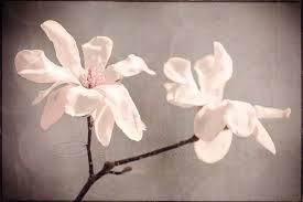 flower photo white magnolia home decor big wall art 20x30 print on white magnolia wall art with flower photo white magnolia home decor big wall art 20x30 print on