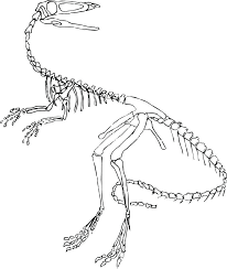 Dinosaur Skeleton Coloring Page Dinosaurs Pictures And Facts Bones