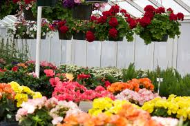garden centers nj. Garden Centers In NJ_Flower Shops Distributors Shop NJ_Variety Growers Neptune NJ Nj