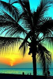 море пальмы: лучшие изображения (37) | Пальмы, Природа и ...