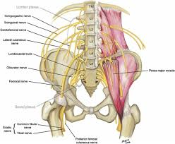 l4-l5 nerve root