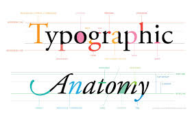 Ascender Definition Graphic Design Ive Made A Bright Happy Infographic Showing The Anatomy Of
