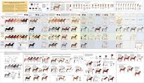 Cat Coat Color Chart Horse Coats Horse Color Chart Horse Coat Colors Horses
