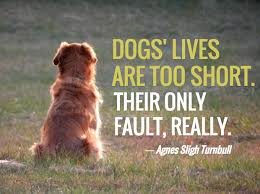 Quotes About Dogs Extraordinary 48 Dog Loss Quotes Comforting Words When Losing A Friend