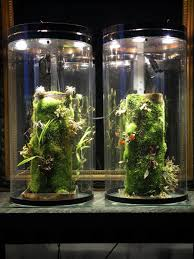 indoors - What kind of light is needed for moss and ferns ...