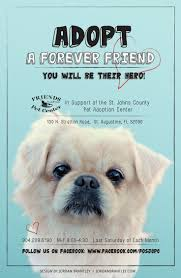Pet Poster Lost Pet Poster Territory Plan Template Certifica On Poster 23