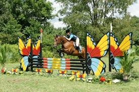 Image result for horse dressed as butterfly