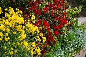 list rock garden plants toronto gardens