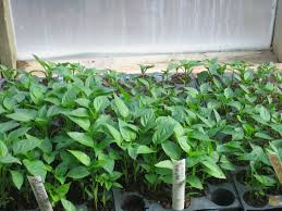 Image result for seedlings