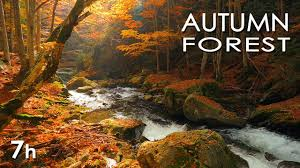 <b>Autumn Forest</b> - River Sounds - Relaxing Nature Video - White ...