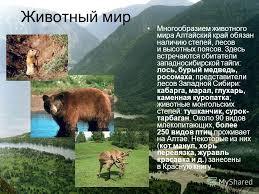 Реферат животный мир восточного казахстана