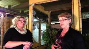 Prue Cox And Her Cattery, A Purrfect Paws - YouTube