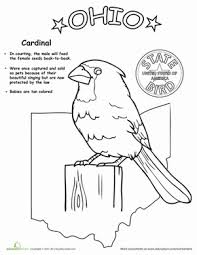 Small Picture US State Bird Coloring Pages Educationcom