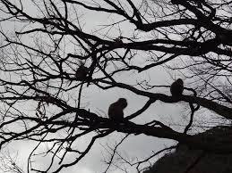京都の猿天国嵐山モンキーパーク いわたやま 外で遊ぶアウトドアライフ