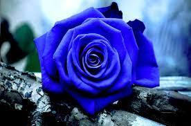 Blue Rose Desktop Wallpapers - Top Free ...