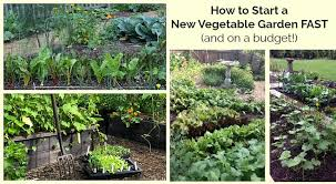 how to start a vegetable garden fast