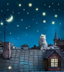 wall mural wallpaper cat starry sky roof at night photo 180 x 202 cm 1 97