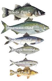Chesapeake Bay Fish Identification Chart A Tale Of Two Streams Mattawoman Watershed Society