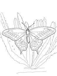Disegni Da Colorare Disegni Da Colorare Farfalla Stampabile