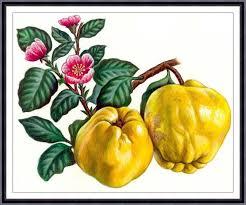 apple kitchen decor. fruit print,fruit painting, botanical art print , apple,kitchen decor, kitchen wall apple decor e