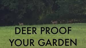 Deer Proof Electric Fence Design Diy Invisible Deer Fence