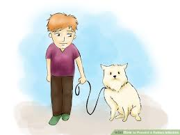 how to prevent a rabies infection steps pictures image titled prevent a rabies infection step 02