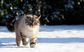 snow hd cat wallpaper [1600x1000 ...