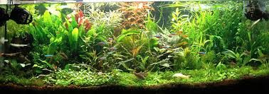 fish tank lighting ideas. the size of your aquarium will also factor in lighting choice deeper aquariums require more intense as wateru0027s depth limit light fish tank ideas n