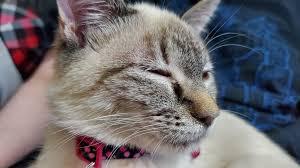 17 week old kitten eye discharge