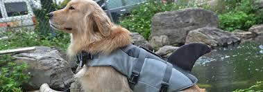5 Best Dog Life Jackets Dec 2019 Bestreviews