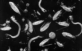 mikroskobik canlılar ile ilgili görsel sonucu