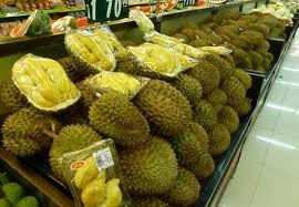 Untungnya Bisnis Durian Dengan Sistem Okulasi