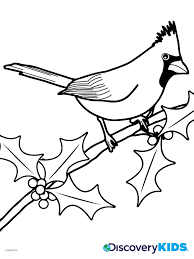 Small Picture Cardinal Coloring Page Discovery Kids