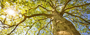 f environmental science bsc undergraduate newcastle a close up image of the branches of a tree