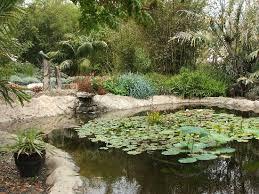 pond at the bamboo garden picture of san go botanic quail botanical gardens encinitas