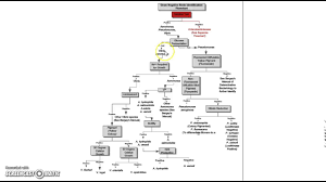 Dichotomous Flow Chart Microbiology 5 1 5 Frontload Biochemical Tests Youtube